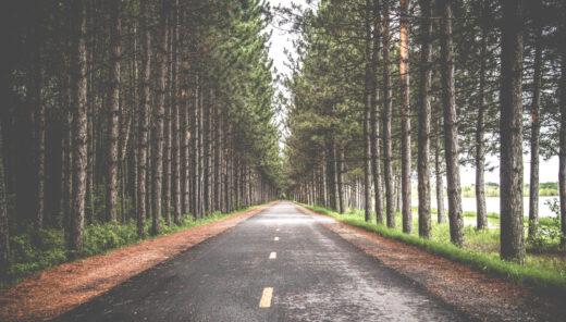 Väg genom skog