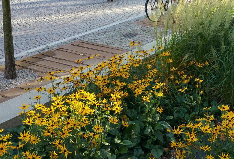 växter vid vägkant