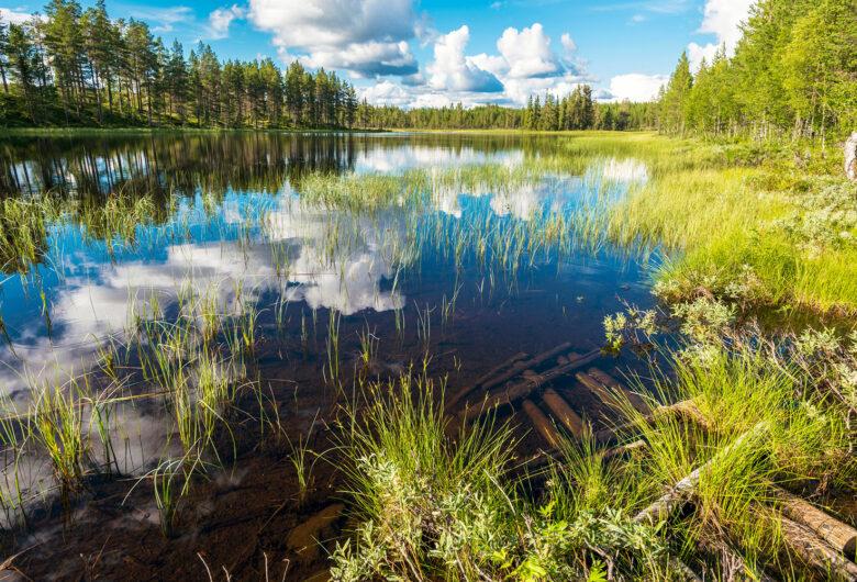 Våtmark i sommartid