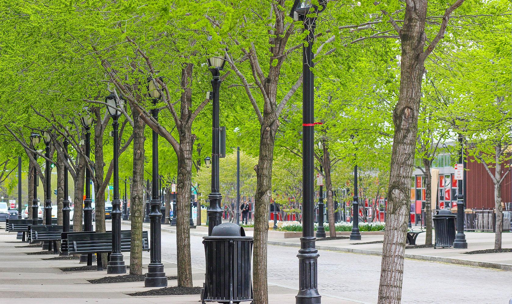 Grönskande gata